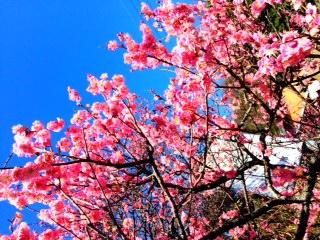 桜もいいですけど梅もなかなか いいものですよ☆